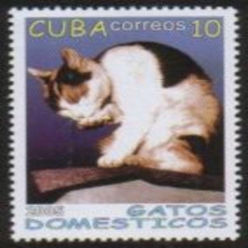 Cuba200503b_100dpi_1